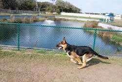 Boarding Dogs In Jacksonville Beach Florida