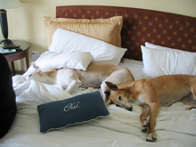 dog friendly hotels